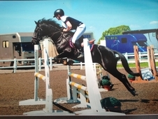 Show Jumping Pony