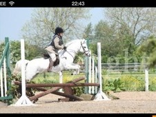 Lovely reg sec A mare 11. 2 all rounder li