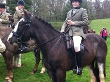 All Rounder horse - 7 yrs 14.2 hh Roan - Somerset