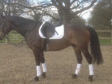 Full Up 15. 2hh All Rounder