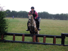 Experienced Allrounder Mare