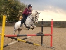 Beautiful 14hh Pony for sale!