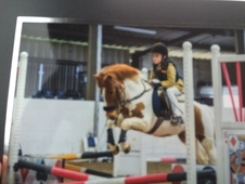 12hh flash looking pony