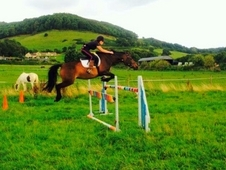 Show jumper/all rounder