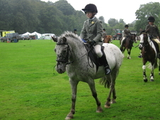 Super Pc Confidence Giving Allrounder, 13. 1hh