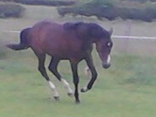 Rising 3yo Filly By Parsons Rasputin