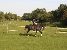Freelance Groom AVAILABLE - Northamptonshire