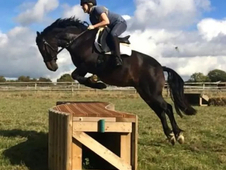 13. 2 Show Jumping/allrounder Mare