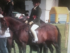 Outstanding Sec B Competition Pony