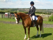 All Rounder horse - 12 yrs 13.2 hh Chestnut - West Yorkshire