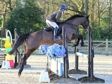 Very Talented Retired Race Horse