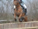Eventers horse - 5 yrs 4 mths 17.0 hh Chestnut - West Sussex