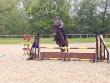 All Rounder horse - 6 yrs 16.1 hh Dark Bay - East Sussex