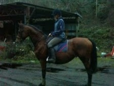 Stallions horse - 15 yrs 16.2 hh Bay - East Sussex
