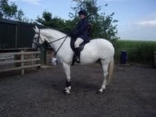 All Rounder horse - 9 yrs 16.2 hh Grey - Berwickshire