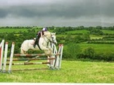 All Rounder horse - 10 yrs 13.2 hh Grey - Berwickshire