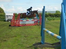 Potential Eventer/showjumper/all Rounder For Sale