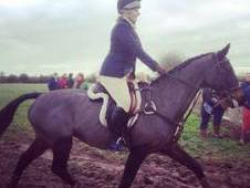 Stunning Allrounder/pc Mare For Sale.