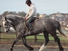 Family horse - 5 yrs 16.2 hh Dapple Grey - West Yorkshire