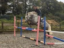 16h 8yrs Grey Ish Gelding By Crannagh Hero (private Sale!)