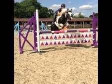 13. 1hh Forward Going Pony
