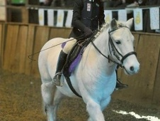Lead Rein & First Ridden horse - 13 yrs 1 mth 11.2 hh Grey - West...
