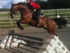 All Rounder horse - 17 yrs 5 mths 16.2 hh Bright Bay - Kent