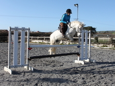 competition/PonyClub/School Master. 9 years old Welsh Grey Geldin...