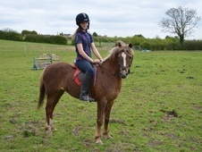 Light Hacks horse - 12 yrs 13.2 hh Chestnut - West Midlands