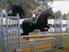 Show Jumpers horse - 15 yrs 13.2 hh Brown - Lancashire