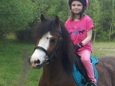 Lead Rein & First Ridden horse - 12 yrs 12.0 hh Bay Roan - West M...