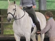 11 year old 16.3hh Irish Sport Horse with large, expressive paces...