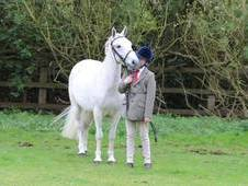 Ideal 2nd Pony for sale