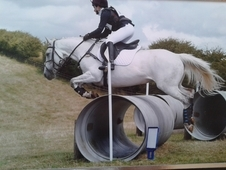 Difficult Type To Find! 14. 2hh Mare