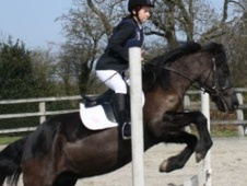 All Rounder horse - 14 yrs 14.0 hh Black - Kent