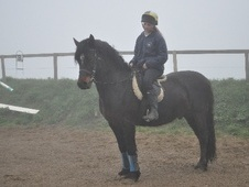Mountain & Moorland horse - 7 yrs 14.1 hh Bay - Dyfed