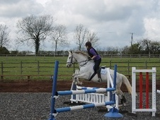 All Rounder horse - 18 yrs 15.2 hh Grey - Derbyshire