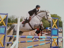 16. 3hh Gelding For Sale/loan