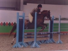 Forward going 13hh alrounder