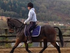 A gorgeous pony for sale