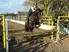 Pretty All Rounder, Dark Bay 16hh Mare