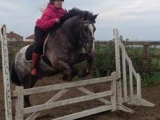13. 3 Pony Club Allrounder For Sale