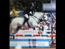 All Rounder horse - 15 yrs 8 mths 14.2 hh Grey - Oxfordshire