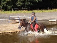 Part Bred Welsh Mare 13. 2hh