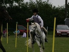 Lead Rein & First Ridden horse - 22 yrs 11.2 hh Grey - West Sussex