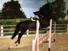 All Rounder horse - 10 yrs 16. 2 hh - Laois