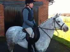 Pony Club Ponies horse - 5 yrs 11 mths 11.2 hh Dapple Grey - Ches...
