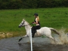 13'2 Pony Allrounder Reduced 4 Quick Sale