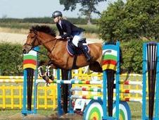All Rounder Horse - 9 Yrs 0. 0 Hh - Cleveland