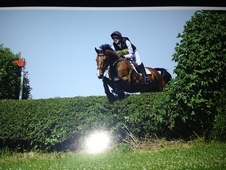 16. 3hh Bay Gelding out of Devils Jump